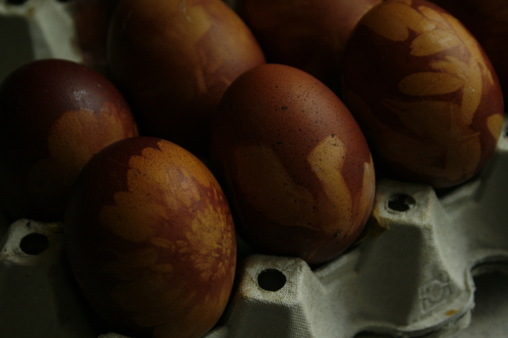 Close Up Eggs