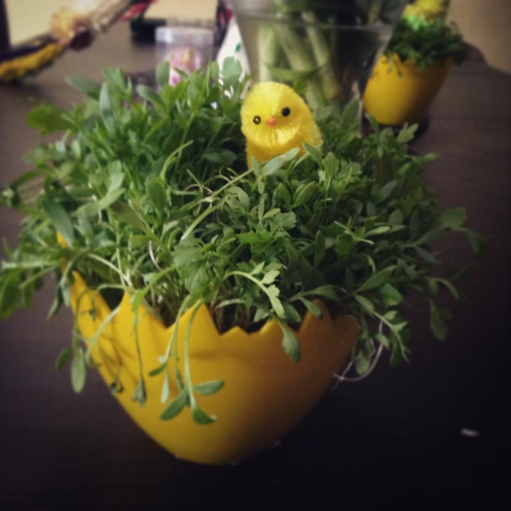 Easter Grass.JPG